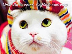 Snoopy cat The most Cutest Cat Breed in World I Love Cats, Crazy Cats, Cool Cats, Cut Cat, Image Chat, Cat Photography, Cat Costumes, Here Kitty Kitty, Oui Oui