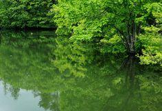 The fresh green and pond ( Yamanashi ,Japan ) Author: Hitomi Zama.