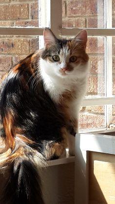 ✮ Cat in the window ✮