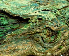 Weathered tree bark