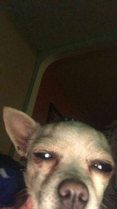 """Me: My stomach hurt Mom: cuz u be on that damn phone"" Funny Animal Jokes, Funny Dog Memes, Cartoon Memes, Cute Memes, Cute Funny Animals, Cute Baby Animals, Funny Cute, Funny Dogs, Cute Dogs"