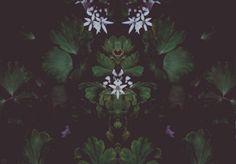 nh-art:  Tribal Worship // Plant fairy