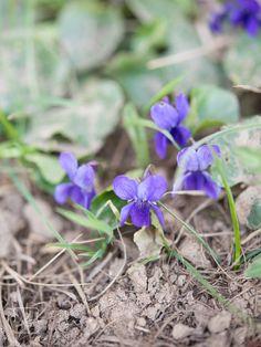 Dzień dobry, Wkrótce zacznie się astronomiczna wiosna, a wraz z nią zaczną jedna po drugiej wychodzić ciekawe rośliny jadalne. Małopolska jest praktycznie biegunem ciepła, więc tutaj wszystko pojaw…