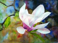 Ross Barbera, Early May: Magnolia, Watercolor on Paper, 22 x 2009 Watercolor Artists, Watercolor Cards, Abstract Watercolor, Watercolour Painting, Watercolor Flowers, Art Floral, Composition Painting, Batik Art, Botanical Flowers