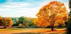 paisajes bonitos de otoño arbol