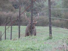 Different type of deer fence. Deer Farm, Deer Fence, Deer Photos, Type, Animals, Animales, Animaux, Animal, Animais
