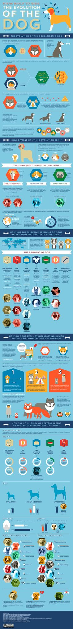Most Popular Groups and Sizes of Dogs Infographic