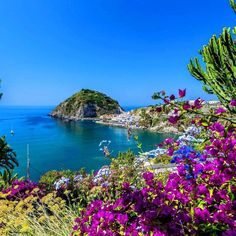 Gorgeous splashes of colour around the island of Ischia! Everyone to Italy next summer! Gorgeous splashes of colour around the island of Ischia! Everyone to Italy next summer! Naples, Promenade En Bateau, Places To Travel, Travel Destinations, Le Vatican, Bon Plan Voyage, Italy Holidays, All Nature, Amazing Nature