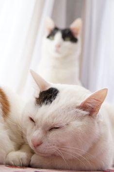 うしろのちび - かご猫 Blog