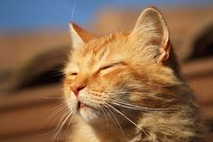 Orange cats are the best cats.
