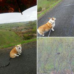 Walking In The Rain, No One Loves Me, Corgi, My Love, Animals, My Boo, Animais, Corgis, Animales