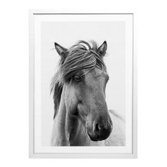 Art Print - Pony - Photography - Blacklist Studio