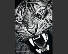 "LakeSide Art - Clayboard Scratchboard, ""Fierce"" Tiger, so cool"