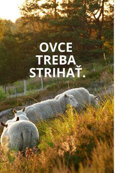 Private Slovak lessons in Bratislava, Bratislava, Sentences, Frases