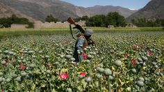 Geez aint that odd? Wonder who's making the $ on all that smack http://news.dethronethebanksters.com/study-heroin-production-hits-record-levels-in-afghanistan/