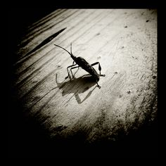 Summer bug (Samsung Galaxy S2)