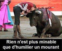 je suis contre la corrida je suis anti corrida il faut les laissez vivre les taureaux libre et en vie et en paix