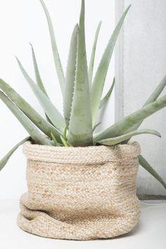 Deze kamerplanten zijn onmisbaar in een gezond huis - Alles om van je huis je Thuis te maken | HomeDeco.nl