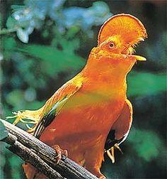 http://www.achetudoeregiao.com.br/animais/gif_animal/biodiversidade8.jpg