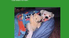 Mascotas  @adilsonperinei  #adilsonperinei