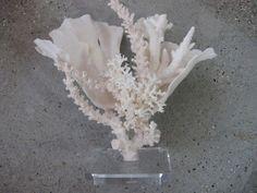 "Coral creation seashell reef tank w/ base 14"""