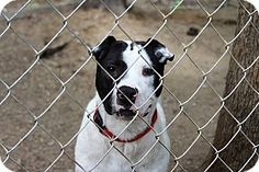 SUPER URGENT! At Crooked Creek Animal Rescue which is closing. Will be going to…