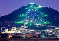 Huge Christmas Tree Lights