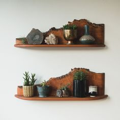 homesteadseattle:New live edge shelves looking reaal good. And kinda like #Kentucky, right?