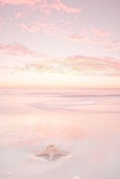 Pink Summer Day at the Beach! Beautiful World, Beautiful Places, Beautiful Pictures, Cute Wallpapers, Wallpaper Backgrounds, Blush Wallpaper, Ocean Wallpaper, Pink Summer, Pink Beach