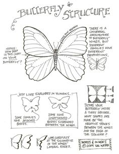 instructions for a butterfly in gouache
