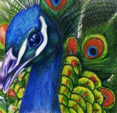 Birds of Color by NightAliveR on DeviantArt