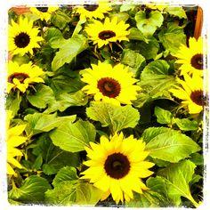 Ofereça flores no Dia da Mãe.