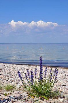 Sandvik, Öland, sweden :-{b> Surf, Places Around The World, Around The Worlds, Sweden Travel, Beautiful Beaches, Wonderful Places, Beautiful World, Places To Go, Scenery