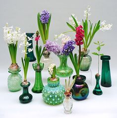 On Sunday May 2015 the National Glass Fair once again hosted an interesting exhibition of collectable glassware. The latest exhibition was curated by Patricia Coccoris and celebrated her passion for hyacinth vases. Hyacinth Flowers, Bulb Flowers, Vases Decor, Table Centerpieces, Bulb Vase, Amaryllis Bulbs, Spring Colors, Colored Glass, Glass Vase