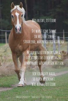 What is left is love - Equine Quotes, Horse Quotes, Cowboy Quotes, All About Horses, O Love, Looking For Love, Horse Love, Love Quotes For Him, True Words