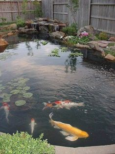 Marvelous Fish Pool Garden Design Ideas for Small Yard - Page 12 of 28 Pond Design, Small Backyard Design, Garden Design, Landscape Design, Large Backyard, Outdoor Fish Ponds, Ponds Backyard, Koi Ponds, Backyard Ideas