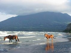 Isle de Ometepe at Lago de Nicaguara.  WILD HORSES ANYONE???  What?? You didn't think wild horses exist any longer??? Well they do--on this volcanic island in the middle of Lake Nicaragua in Nicaragua. We saw them run on the beach. Free and majestic. A beautiful sight to behold.
