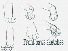 Front Paws Sketches by dyb on DeviantArt