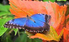 1920x1200 high resolution wallpapers widescreen butterfly