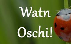 Wenn Du draußen einen riesigen Marienkäfer gefunden hast: | 17 wundervolle Sätze, die Du nur kennst, wenn Du im Pott aufgewachsen bist