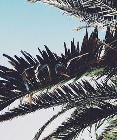 palm tree   tropical nature