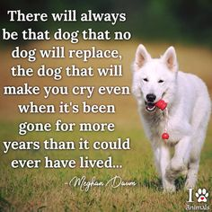 I cant face that day! I Love Dogs, Puppy Love, Cute Dogs, Beautiful Dogs, Animals Beautiful, Pet Poems, Animals And Pets, Cute Animals, Pet Loss Grief