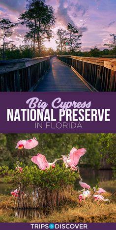Explore Florida's Big Cypress National Preserve Florida Vacation Spots, Visit Florida, Florida Travel, Florida Beaches, Travel Usa, Florida Trips, Vacation Trips, Affordable Family Vacations, Family Holiday Destinations