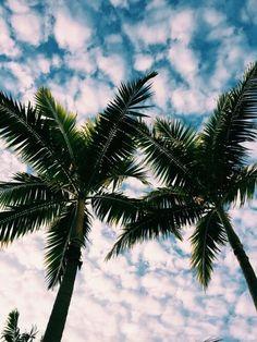 Summer, palmeras, verano