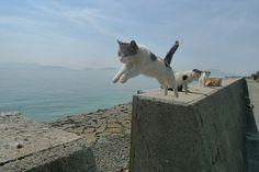 ねこ島に行って来たので猫写真貼っていく:ハムスター速報