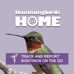 Explore the World of Hummingbirds | National Audubon Society