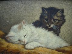 Raaphorst, Cornelis - twee spelende kittens