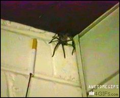 Spider Attacks Cigarette discovers it's not Malboro Red and spits it out. Funny Animal Pictures, Funny Photos, Funny Animals, Scary Animals, Funniest Animals, Funny Jokes, Hilarious, Stupid Funny, Just Deal With It