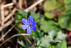 반디지치 Botanical Art, Wild Flowers, Plants, Wildflowers, Plant, Planets