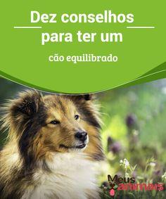 Cão equilibrado, dez conselhos para se educar um  Um #cão #equilibrado é um cão #feliz. Mas para ser feliz, sentir-se bem e viveruma #vidaplena,é necessário uma série de fatores. #Conselhos